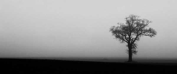tree giclee photo prints
