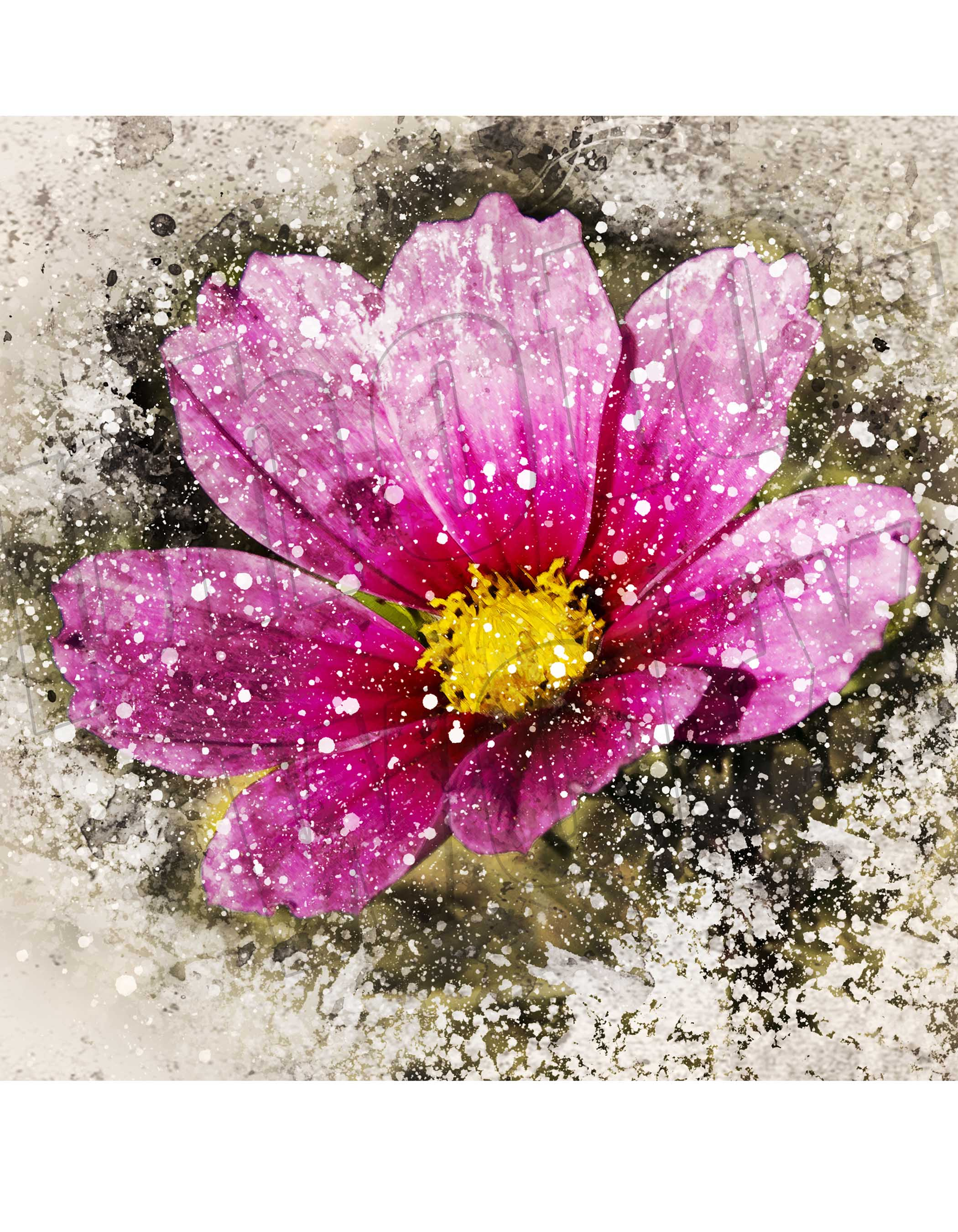 Pink Cosmos Flower Print Photoworx Picture Framers